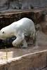 IMG_1514Madison Zoo 071110