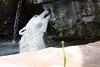 IMG_1510Madison Zoo 071110