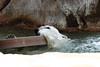 IMG_1528Madison Zoo 071110