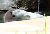 IMG_1515Madison Zoo 071110