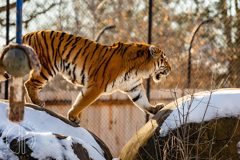 Animals of the Henry Vilas Zoo