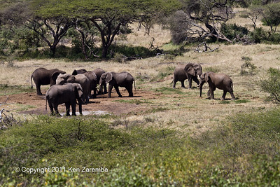 "Elephants at the ""Log Jam"" watering hole, Ol Donyo Wuas"