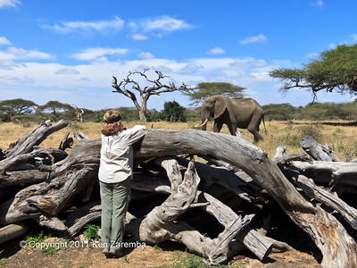 "Viewing African Elephants from the ""Log Jam"" at Ol Donyo Wuas, Mbirkani Maasai Group Ranch, Great Plains Conservation, Kenya"