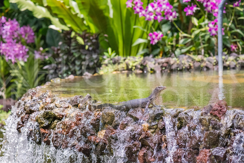 Common Water Monitor