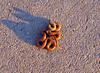 San Bernardino Ring-necked Snake (Diadophis punctatus modestus), Lakeview Mountains, 3/13/07