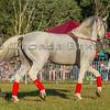 Stallions_George Bekris-25