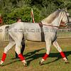 Stallions_George Bekris-20