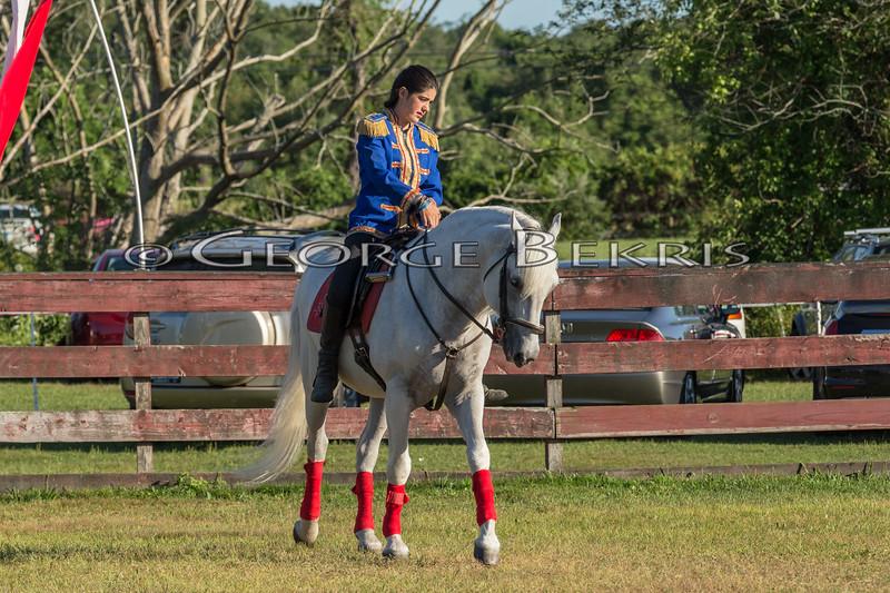 Stallions_George Bekris-2