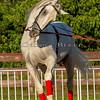 Stallions_George Bekris-28