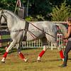 Stallions_George Bekris-23