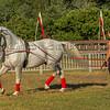 Stallions_George Bekris-17