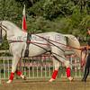 Stallions_George Bekris-26