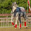 Stallions_George Bekris-27