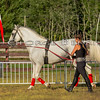 Stallions_George Bekris-21