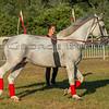 Stallions_George Bekris-19