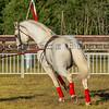 Stallions_George Bekris-22