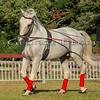 Stallions_George Bekris-24