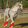 Stallions_George Bekris-18