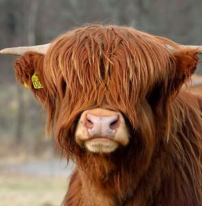 Have a nice....hair! :)