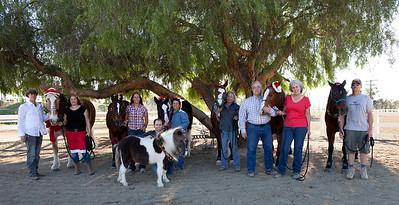 holiday horses-21