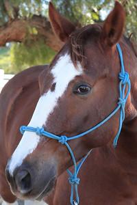 holiday horses-3