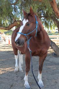 holiday horses-7