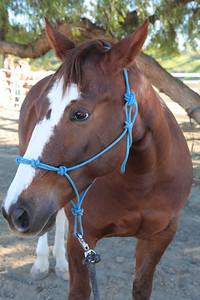 holiday horses-12