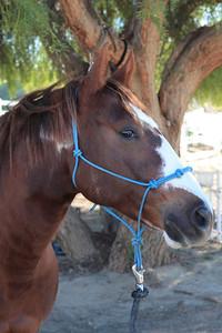 holiday horses-10