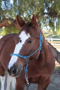 holiday horses-4