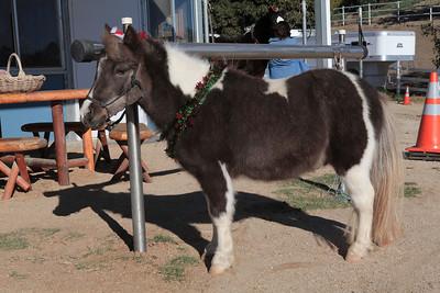 holiday horses-16