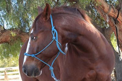 holiday horses-9