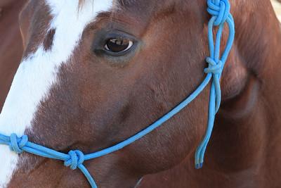 holiday horses-11