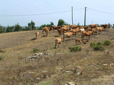 Holy Cow Aljezur Portugal by Richard Lazzara