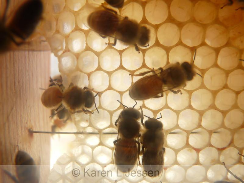 Honeycomb Fan