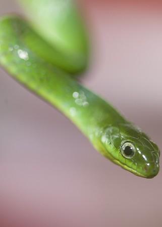 Hong Kong Snakes