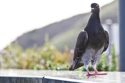 Professor Birdbrain