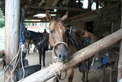 Horse Back Riding Aug 2009