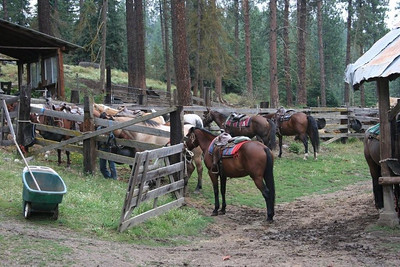 All the horses that were on the trail ride.