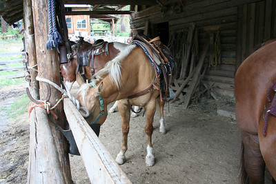The horse I rode. Now getting to eat some oats after a long ride.