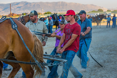 Horse Pull 2016 Salt Lake Co Fair