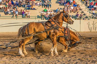 Horse Pull in Draper, Utah - July 19, 2014