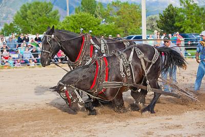 Horse Pull in South Jordan, UT June 17, 2011