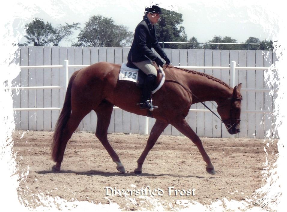 Diversified Frost-2002 Hunter Under Saddle