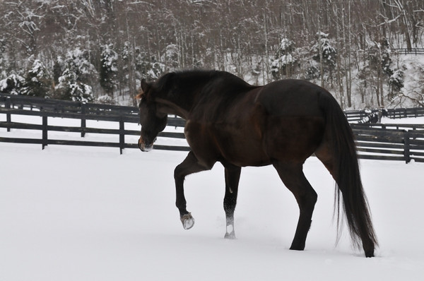 Corigliano and friends are playing in the snow at Compass Rose Farm.
