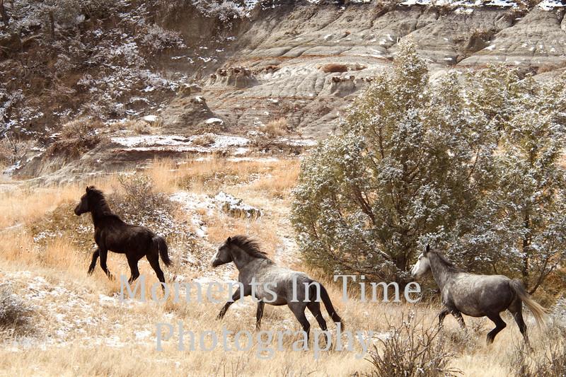 Roosevelt wild horses jpg
