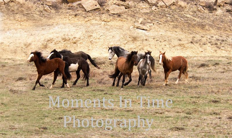 Wild horses in action