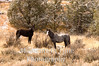Wild horse pair in winter