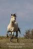 Prancing stallion v