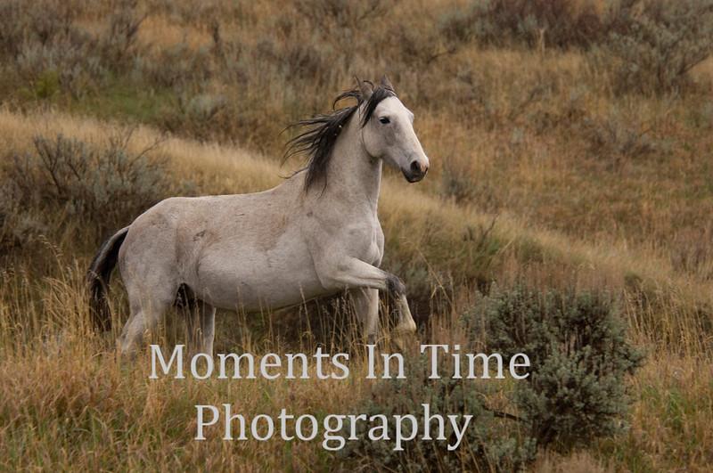 Wild stallion emerging
