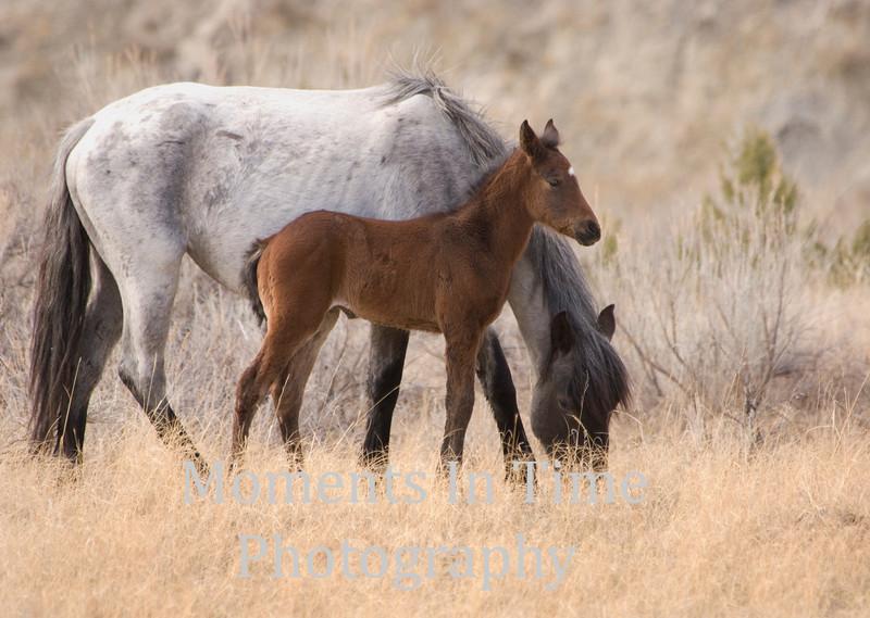 Dappled gray brown foal